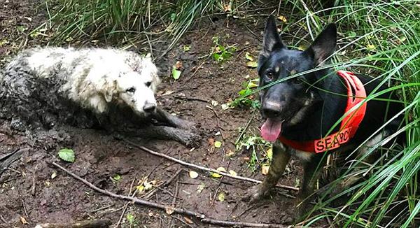 美国一搜救犬单独出动 成功帮助宠物狗脱困
