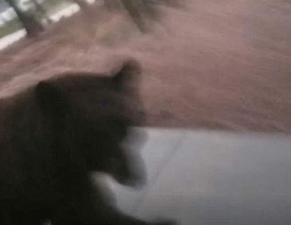美男子欲唤宠物狗进门不料与大黑熊面对面