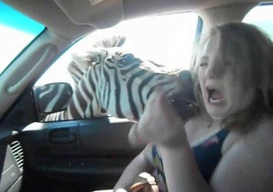 """这些动物太""""任性"""" 大象这是要干什么?"""
