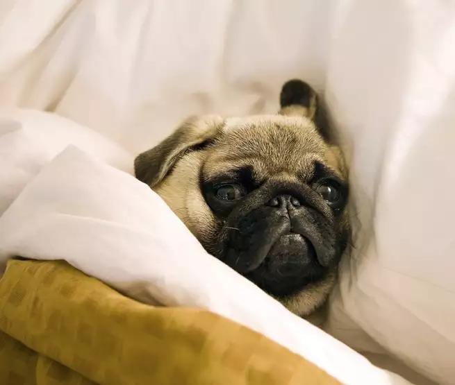 晚上不睡,白天崩溃!睡前拖延这病得治