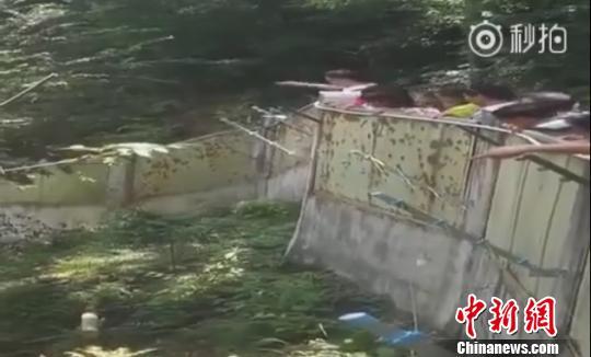 佛坪大熊猫乘凉遭游客投掷石块 佛坪:正寻找该名旅客