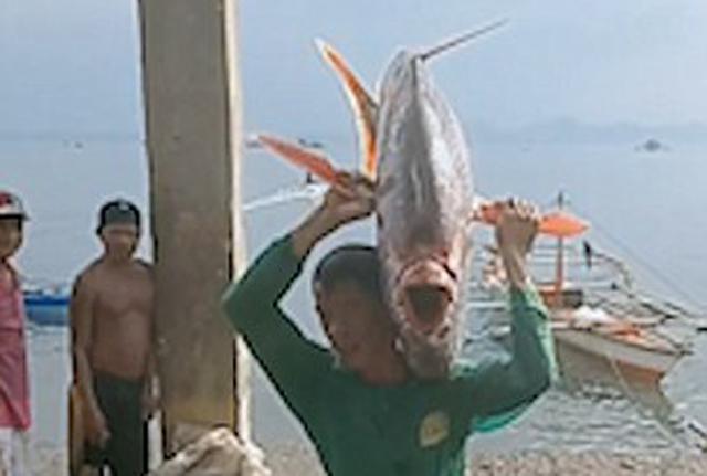 菲律宾渔民捕获巨型月亮鱼扛回家与亲友分享
