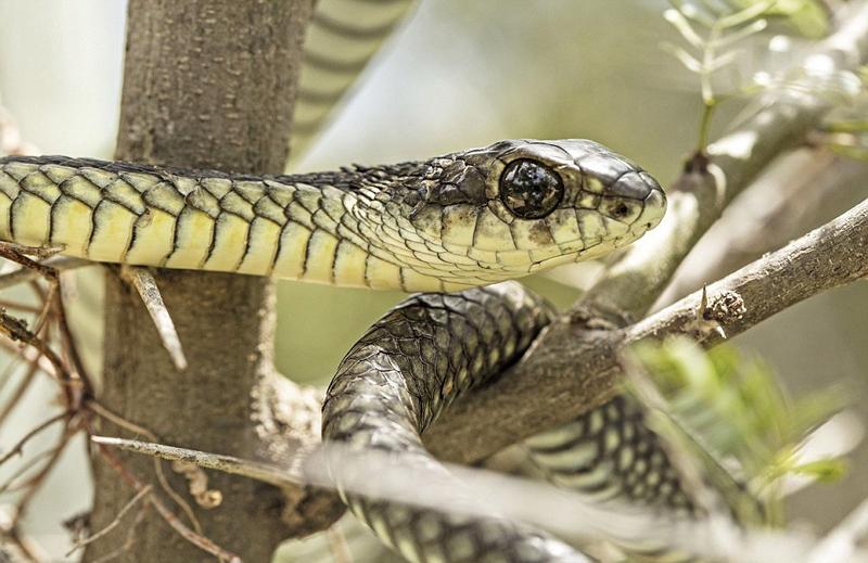 胆大!南非男子冒险拍摄自己在蛇眼中倒影