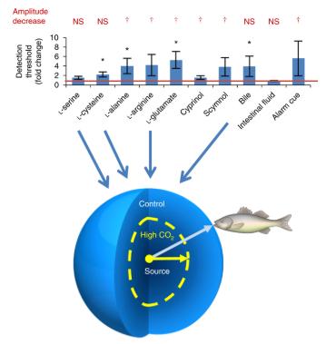 鱼类是否会因为酸性更强的海洋而失去嗅觉?