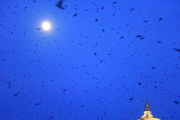 海南琼海出现万只燕子归巢景观