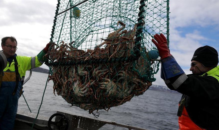 冰天雪地!揭秘北极圈帝王蟹捕手的生活