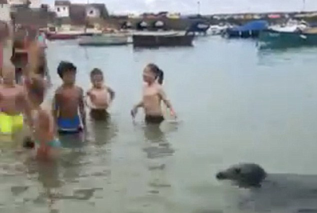 """英海豹无惧海滩人群 欲与人类""""亲密接触"""""""