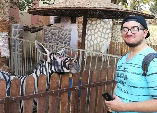 糗!埃及动物园画驴充斑马被游客一眼看穿