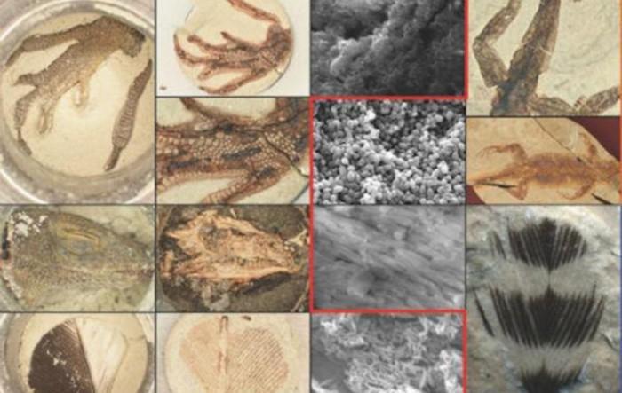 新的实验室方法在24小时内创造出逼真的化石