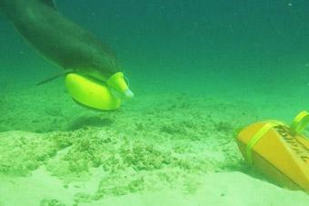 环太军演美军出动战术海豚 执行一项特殊任务