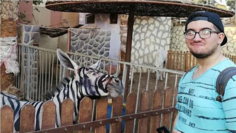 """神操作!开罗动物园被指将驴画成""""斑马"""",""""愚弄""""游客"""