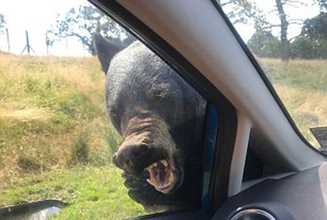 美妇女带家人游动物园遭黑熊袭击 园方遭控诉