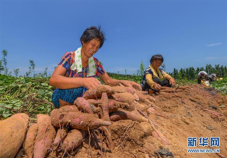 特色农业助力乡村振兴