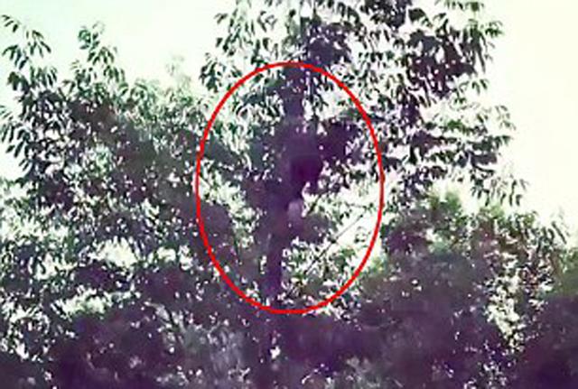 美男子表演树上接飞盘不慎压断树枝坠落成重伤