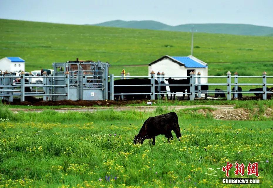 草原不止有苍茫壮阔   还有柔美清丽,明媚动人   这里有好客的蒙古包