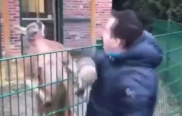 """土耳其公园内游客挥拳逗袋鼠遭其""""冷眼相待"""""""