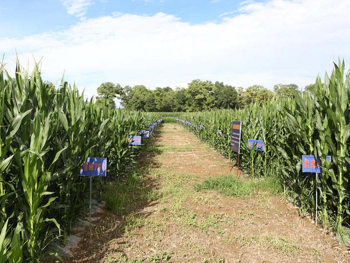上半年我国农产品合格率达97.1%质量向优
