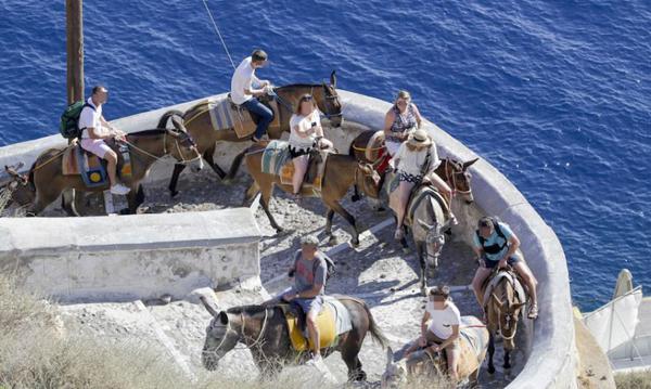 希腊名胜小岛毛驴因驮超重游客身体受损引关注