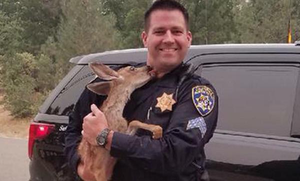 温馨!美小鹿大火中获救后亲吻警察以表感谢