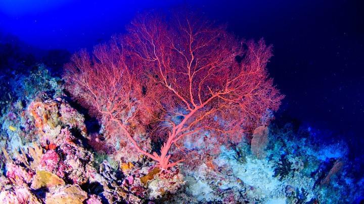 气候变暖,人能躲到空调屋,那珊瑚能躲到哪儿?