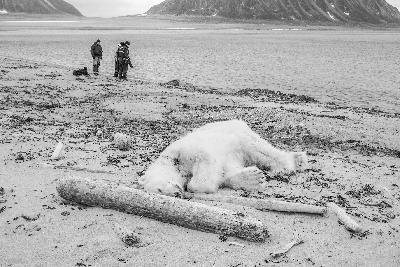 """德国""""极地游""""杀死北极熊惹争议  挪威警方已介入调查"""
