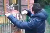 土耳其公园内游客挥拳逗袋鼠遭其冷眼