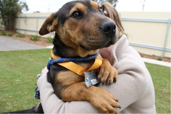 澳大利亚:狗狗2.5小时成功挑战21公里半马 获颁奖牌