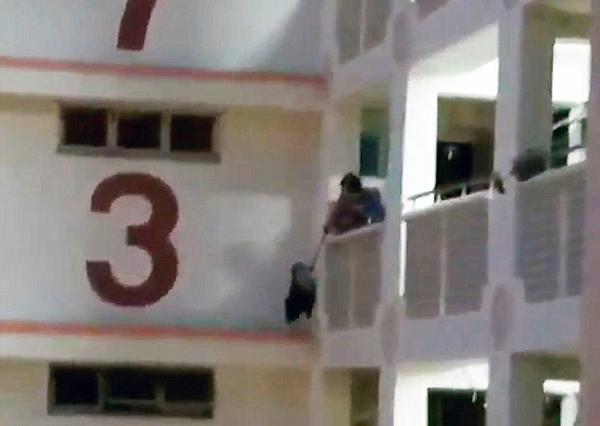 新加坡一猫咪被困公寓11楼逃脱救生网意外摔死