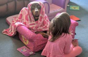 主人不在家狗狗来看娃