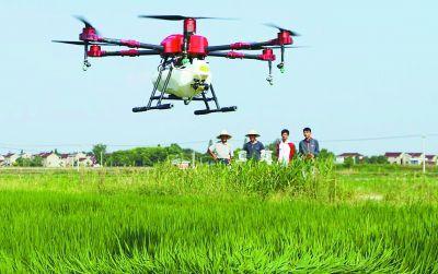 南京高淳农民利用无人机防治水稻病虫效率高