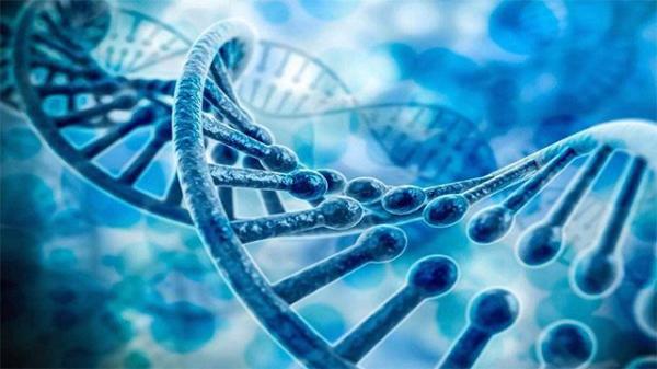 技术突破!中国科学家超越国际同行:将16条染色体合一