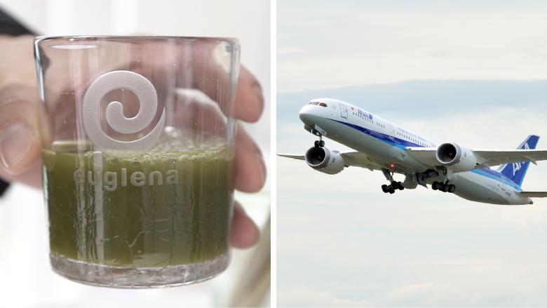 日本眼虫公司研发藻类 发现其可提取燃油助力飞机航行
