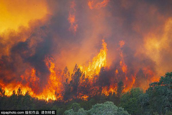 美国加州森林大火火势不减损失惨重