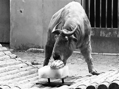 动物园备凉方应对酷暑