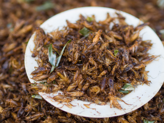 研究称吃蟋蟀带来更高水平的有益菌 有助于肠道健康