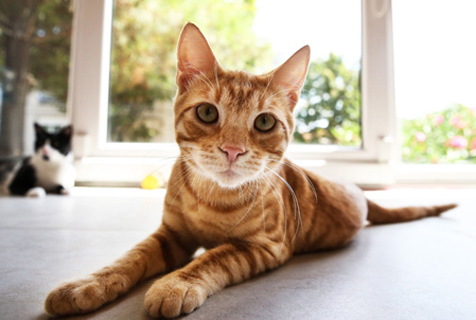 探访土耳其猫屋旅馆 看大眼喵星人肆意卖萌
