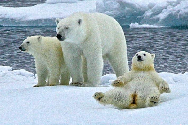 """32℃的北极圈 替我们的""""大白""""捏把汗"""