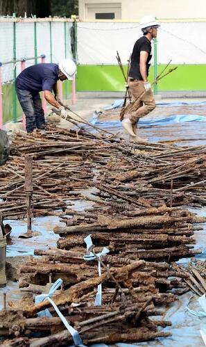 日本学校施工挖出旧枪炮2900件 自卫队已回收