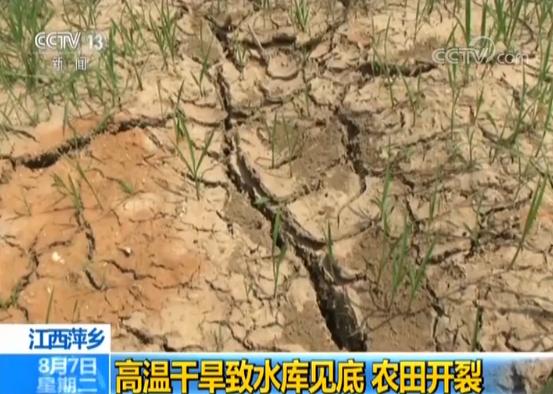 江西持续高温:280万亩农作物受旱_14万人饮水困难