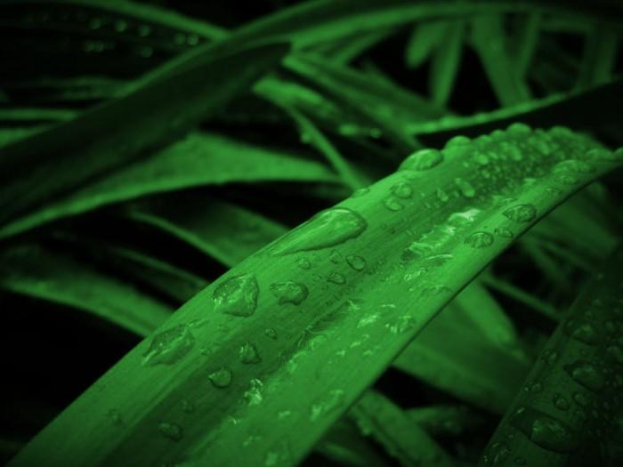 香水师都痴迷的气味:雨后空气为何这么好闻?
