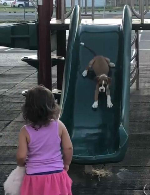 萌趣十足!美两岁女童教爱犬玩滑梯