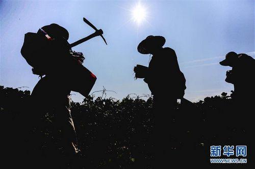 江西峡江:烈日下的巡渠工