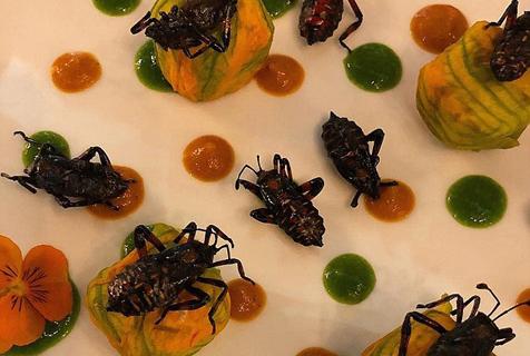 美挑剔吃货爱上昆虫大餐 自创菜品鼓励他人尝试