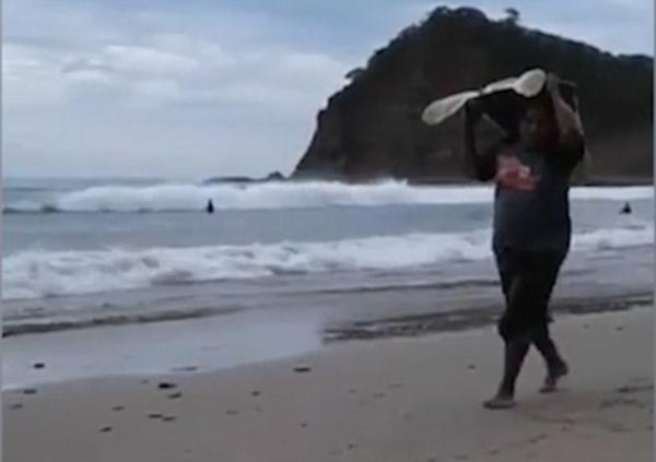 """尼加拉瓜""""准妈妈""""海龟被盗猎者举头顶偷走"""