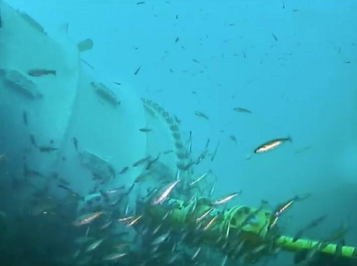 微软在海底安装网络摄像头:观察数据中心及鱼类