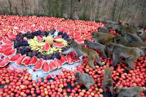 """河南济源太行猕猴共享""""豪华""""冰镇水果宴"""