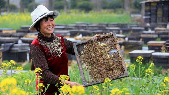 蜂协推广养蜂助脱贫