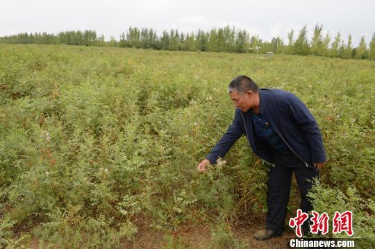 中国三北地区实现土地沙化连续15年净减少