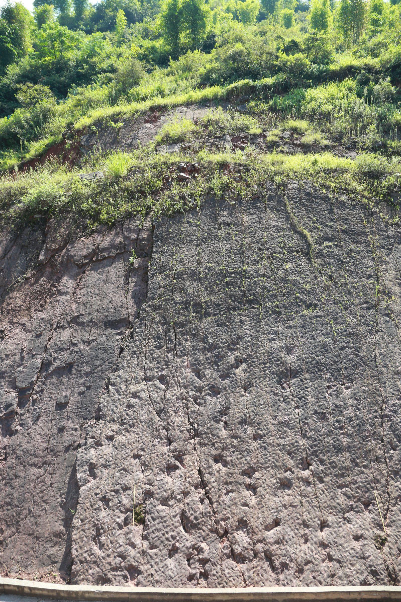 茅台镇发现250个侏罗纪早期恐龙足迹 距今约1.8至1.9亿年