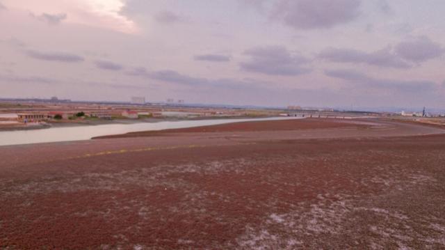 """""""红地毯""""盖满南海新区昌阳河"""